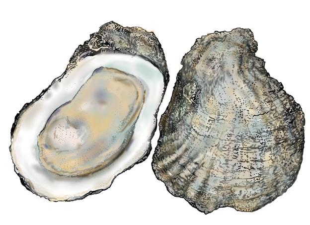 oysters_hres.jpg