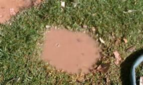 mud hole.jpg